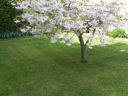 Mowed and strimmed lawn by oakwood gardening services